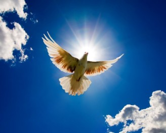 dove-bird-for-world-peace-1280x1024-1024x819